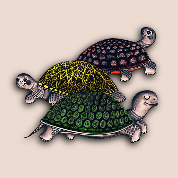 Želví závody