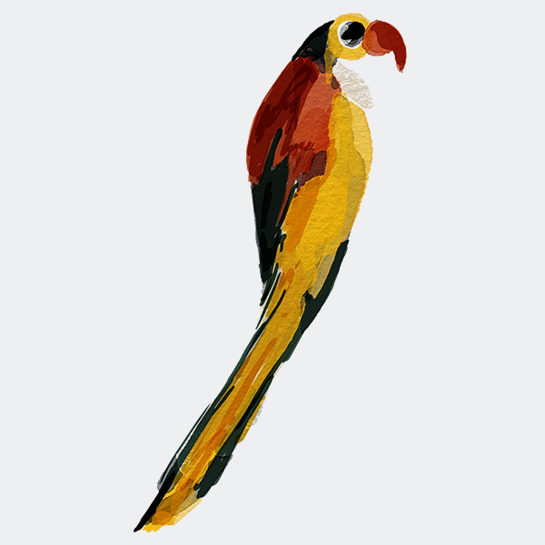 Papoušek - loro colorido
