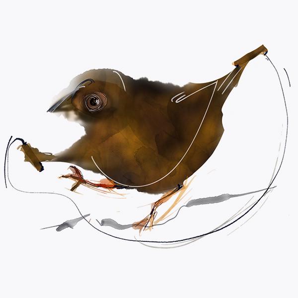 Ranní ptáče dál doskáče