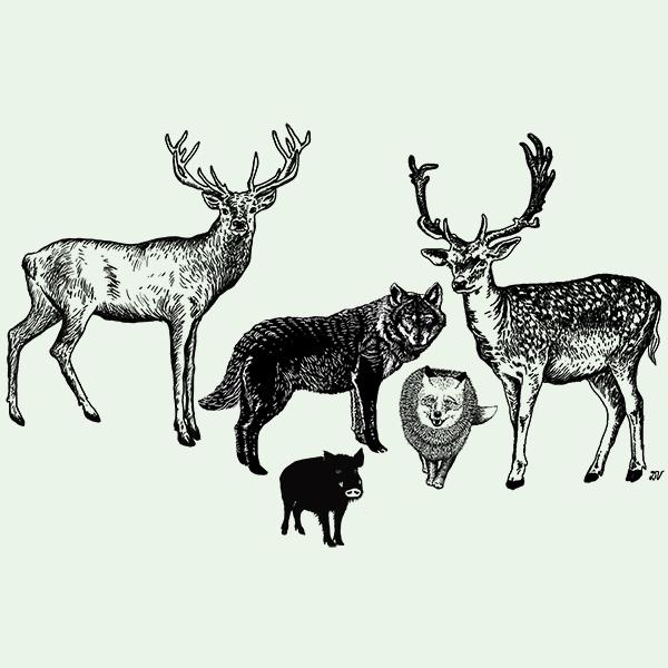 Viděl jsem jelena...